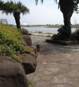葛西臨海公園、ネコ