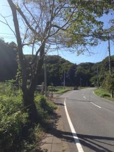 大福山林道入り口