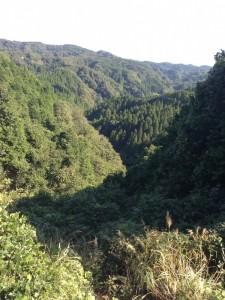 大福山林道登りの途中から景色