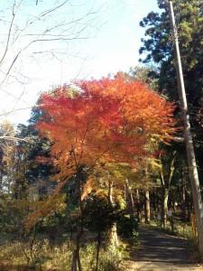 理窓会記念林自然公園の紅葉