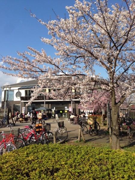 みはらし茶屋、桜
